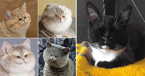 lista fotos gatos cara pequena