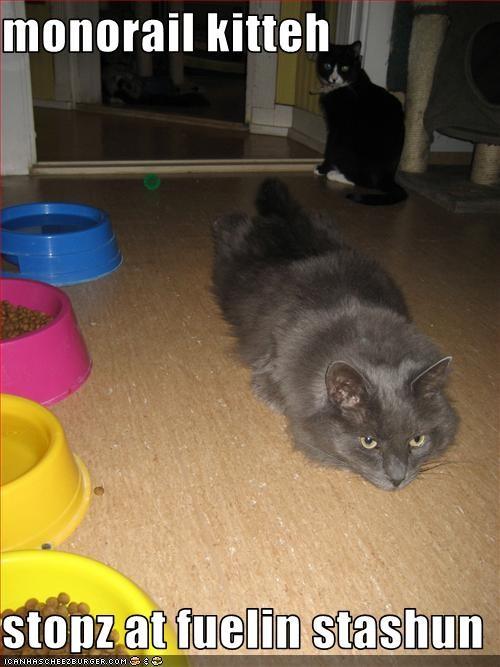 fud,monorail cat
