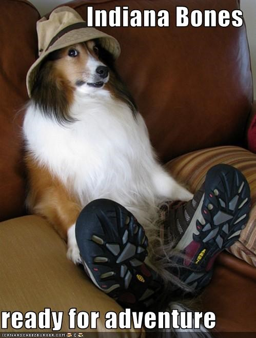 adventure,hat,indiana jone,shetland sheepdog,shoes