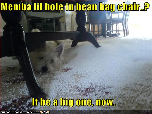 bean bag chair,chair,destruction,hole,mess,west highland white terrier