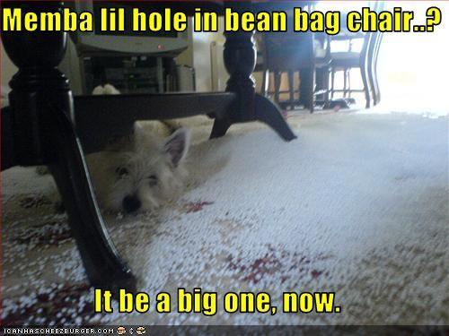 bean bag chair chair destruction hole mess west highland white terrier - 2761627136