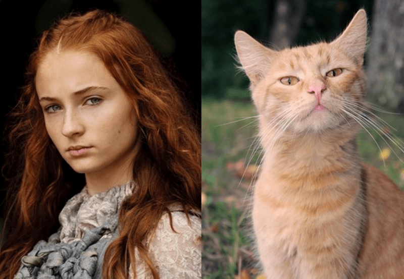 a picture of sarsi and her cat look a like - cover for a list on the characters in game of thrones that have at look a likes