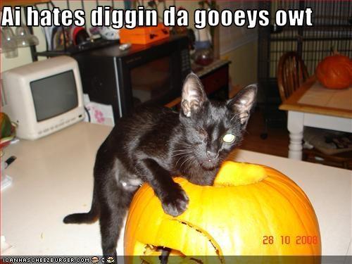 do not want gross pumpkins - 2762477056