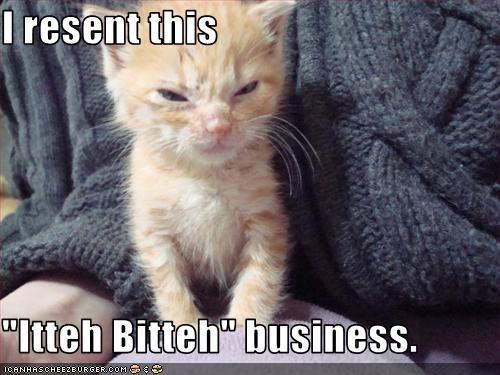 do not want ibkc kitten
