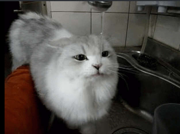 a funny picture of a white fluffy cat drinking water from a sink , cover for a list of hilarious gifs of cat fails