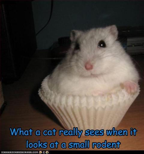 cupcake fud lolhamsters nom nom nom - 2764552704