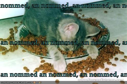 Cheezburger Image 2764589568