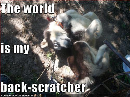 back malamute scratch world - 2764791296