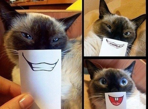 a collage of 3 photos of a cat and its owner using paper to change the smile each shoot- cover for a list of funny photos of cats smiling