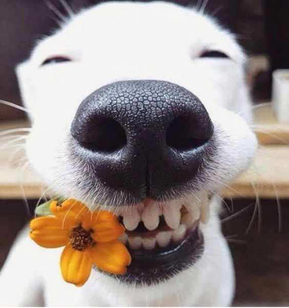 a photo of a a dog with a huge smile on its face and how a big orange flower in its mouth - a cover photo for a list of the happiest and smiling dogs to help anyone get through a working day