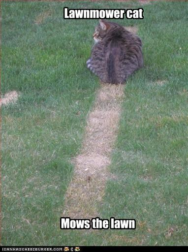 Lawnmower cat Mows the lawn