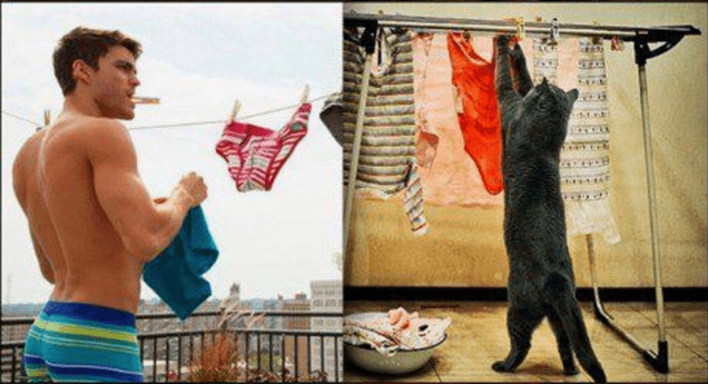 A photo of a male model hanging up laundry and the side picture a grey cat is doing the same hanging up laundry, basically copying the male model