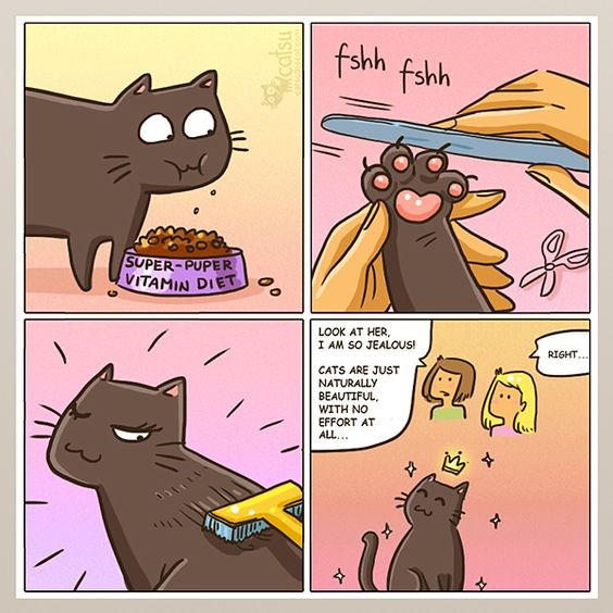 a funny comic about how long it takes for cats to look beautiful but everyone things its all natural.