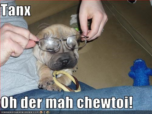 chew toy,glasses,shar pei