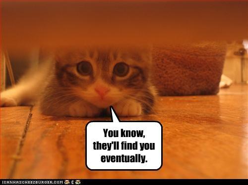 cute helping hiding kitten - 2769851648