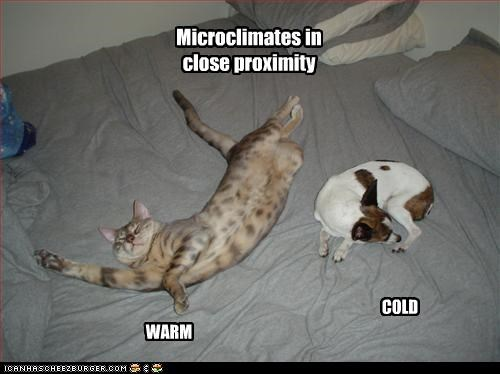 Microclimates in close proximity WARM COLD