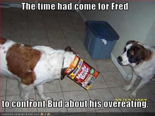 box head overeating stuck treats whatbreed