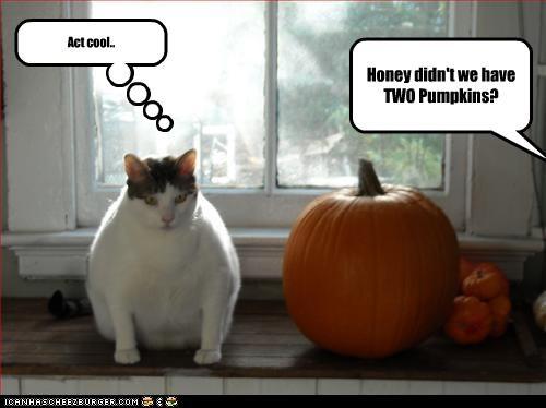 nom nom nom plotting pumpkins
