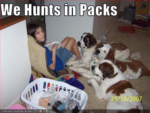 cornered girl hunt kid pack saint bernard - 2774339840