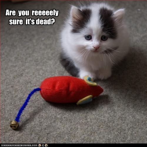 cute kitten toy - 2776199424