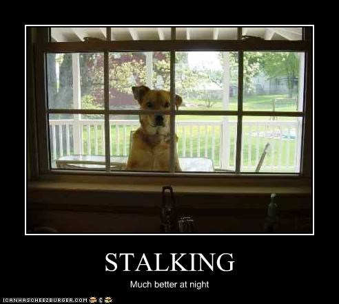 creepy,FAIL,stalking,watching,whatbreed,window