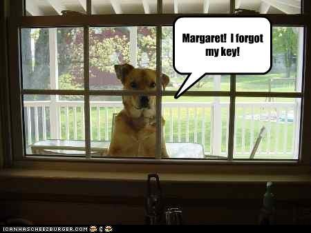 Cheezburger Image 2776878336