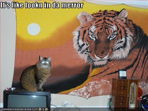 handsome,mirror,tiger