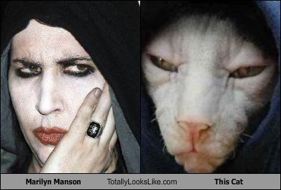 hairless cats,hood,marilyn manson
