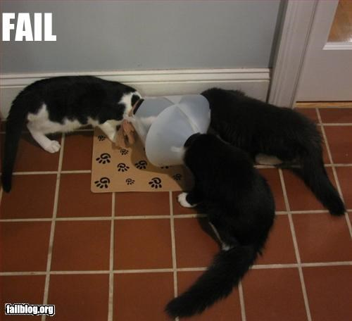 Cats cones eating g rated - 2779003904