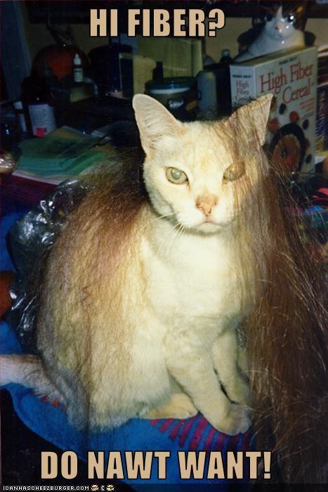 Cat - HI FIBER? High Fiber Cereal DO NAWT WANT! ICANHASCHEE2BURGER cOM