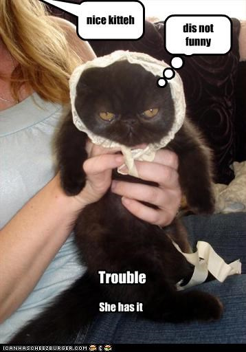 dis not funny nice kitteh Trouble She has it