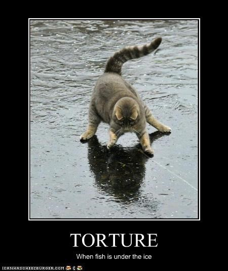 do not want,fish,torture