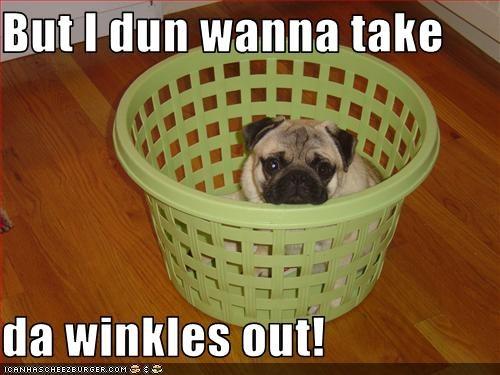 basket laundry pug wrinkles - 2782984960