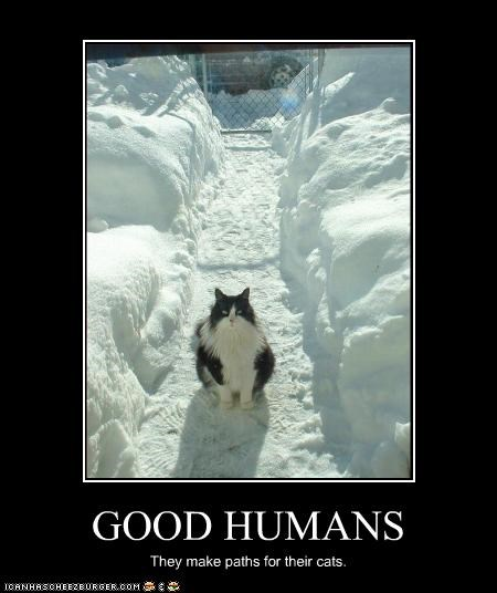 GOOD HUMANS They make paths for their cats.