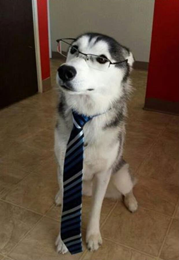 dogs tie list work take your dog to work day suit business - 278533
