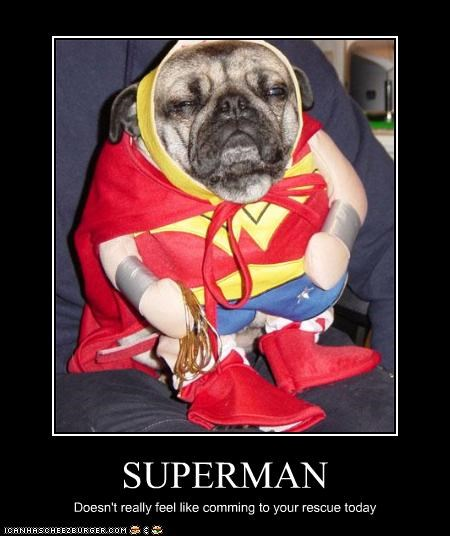 lazy pug rescue superdog - 2786066432