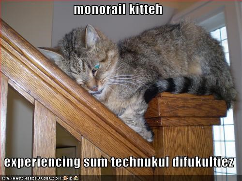 monorail cat,stuck