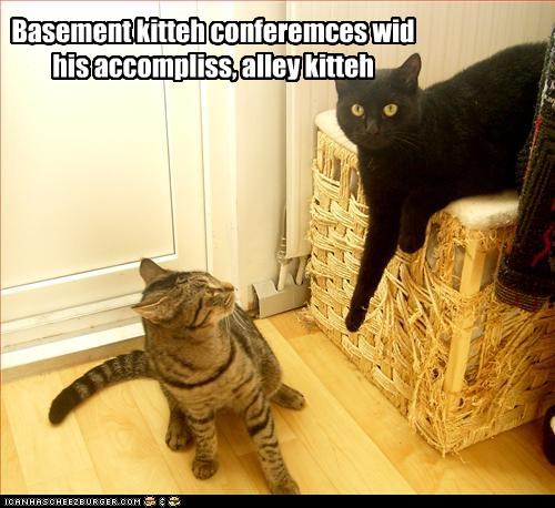 Basement kitteh conferemces wid his accompliss, alley kitteh
