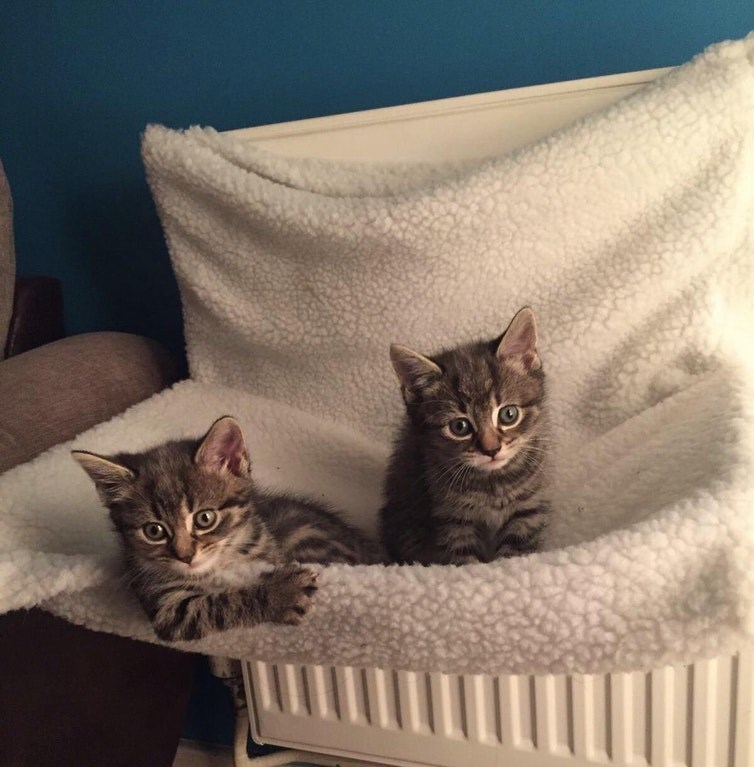 a photo of two kittens - cover for a list of very cute kittens