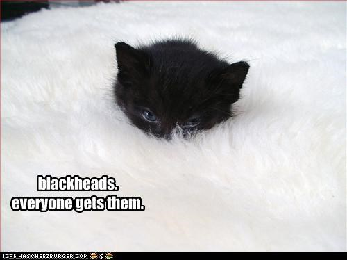 black,hiding,kitten