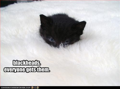 black hiding kitten - 2792319744
