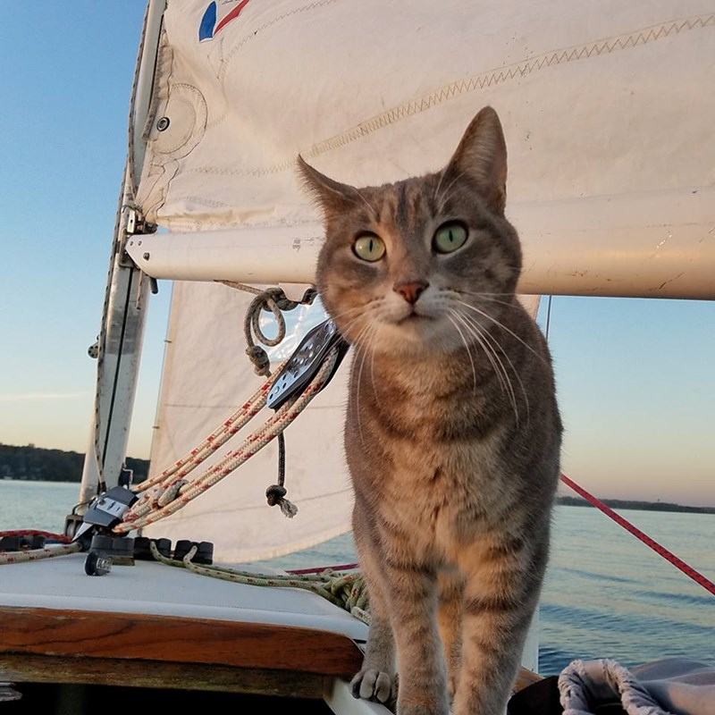 adventure cats traveling all around the world