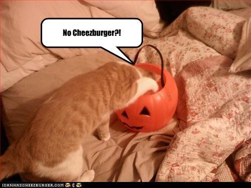 Cheezburger Image 2792864256