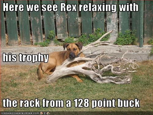 deer posing tree trophy whatbreed - 2792977664