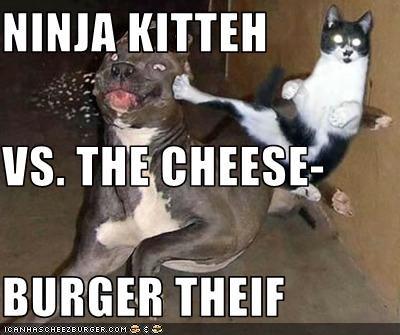 Cheezburger Image 2794752768