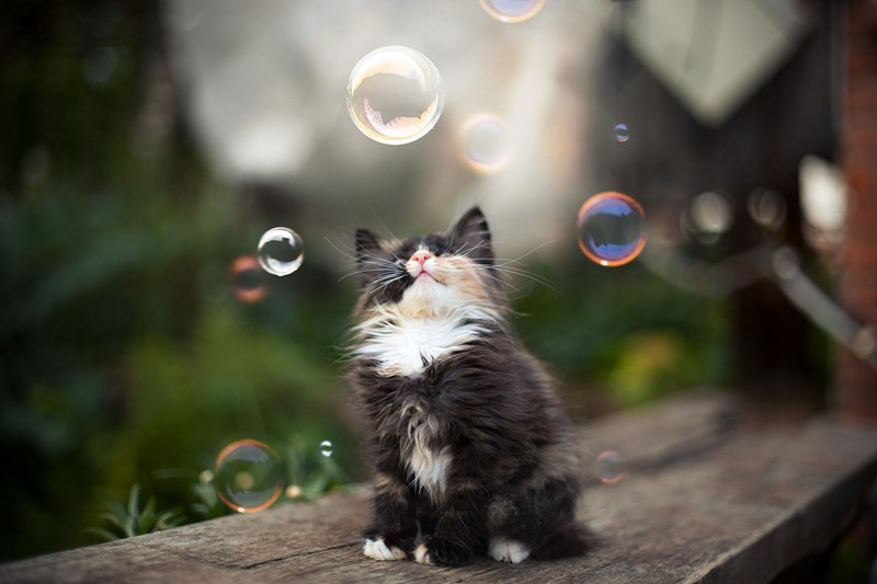 14 signs that prove your cat is happy and healthy