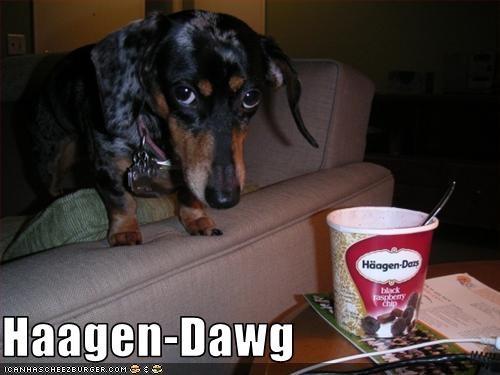 dachshund,food,ice cream,nom