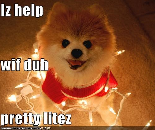 christmas help lights pomeranian puppy - 2795244288
