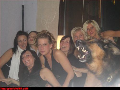 Animal Bomb animals bark dogs german shepherd - 2795642368