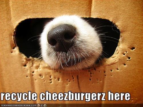 Cheezburger Image 2797141760
